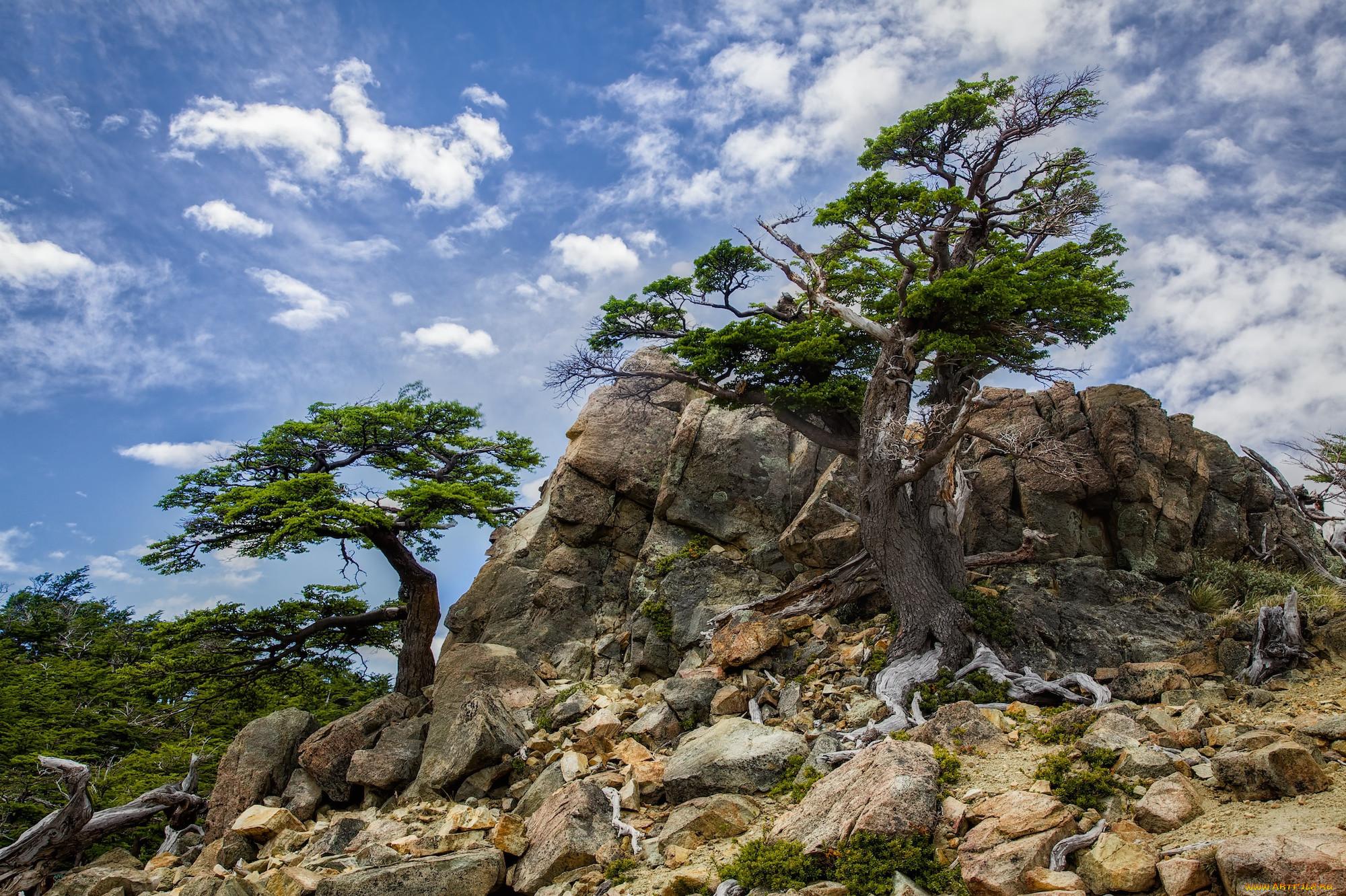 дерево растущее в камне фото темноволосы, подходящими оттенками